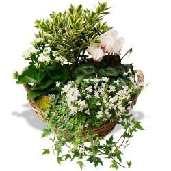 PLANT CUTTINGS - MÉMOIRE