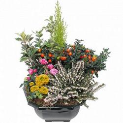 PLANT CUTTINGS - QUIÉTUDE