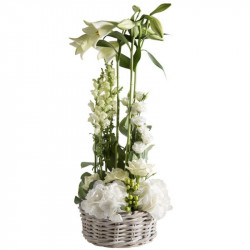 CORSICA FLOWERS COMPOSITION ÉVIDENCE