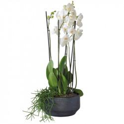 CORSICA WHITE ORCHIDS ARRANGEMENT