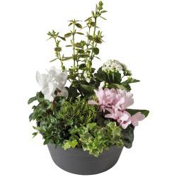 PLANT CUTTINGS - DE TOUT COEUR