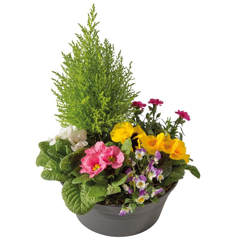 PLANT CUTTINGS - SINCÈRE AFFECTION