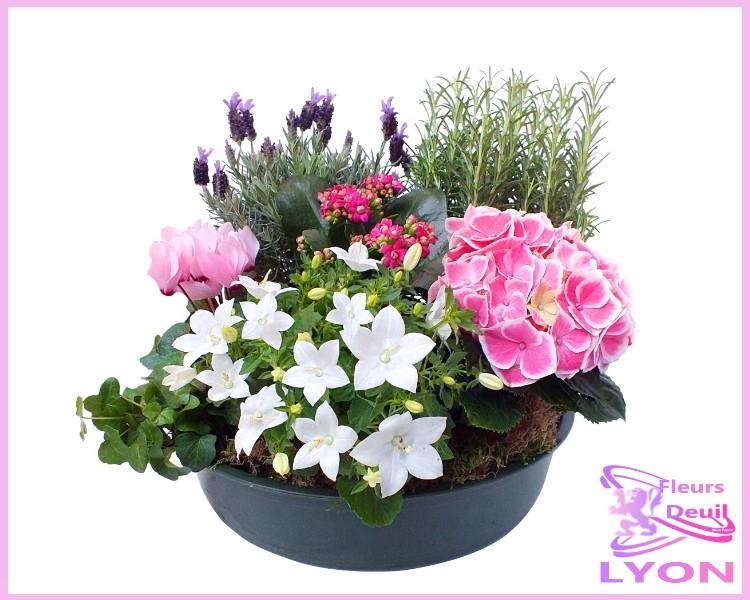 sympathy dish garden lyon fleurs deuil lyon. Black Bedroom Furniture Sets. Home Design Ideas