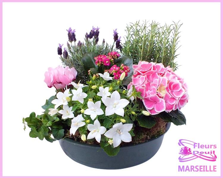 Coupe de plantes deuil marseille fleurs deuil marseille for Commander des plantes